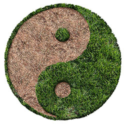 The Yin & Yang of Price Optimization